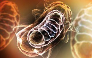 LHON: Verbesserung der Sehfähigkeit dank neuartiger Gentherapie