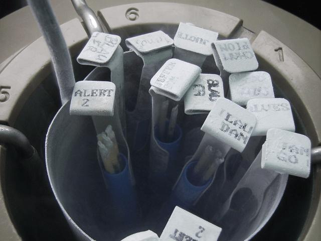 Spermienmigration im Genitaltrakt – Computersimulationen identifizieren Schlüsselfaktoren für den Reproduktionserfolg